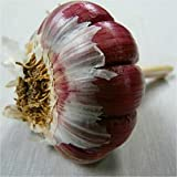 100pcs Aglio semi rossi e sano Bonsai Semi Diy pianta rara cipolla Garlics Vegetable Seeds Very Easy Grow Per la casa e giardino grigio chiaro