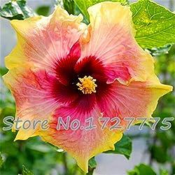 Shopmeeko Im Angebot!!!200 stücke Hibiskuspflanzen 24 arten HIBISCUS ROSA-SINENSIS Blumenpflanzen Hibiskuspflanzen für Blumentopfpflanzen: Deep Blue