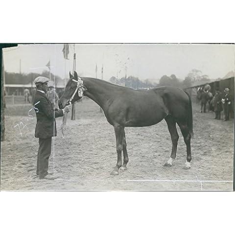 Vintage Foto Di Un Uomo con un cavallo in Perù, Palestina, 1913.