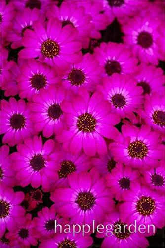 50pcs / bag gerbera semi s, semi di fiore misti facile da coltivare per jardin, giardino fiori seeds: 8