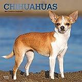 Chihuahuas 2019 - 18-Monatskalender mit freier DogDays-App: Original BrownTrout-Kalender [Mehrsprachig] [Kalender]