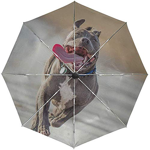 Automatischer Regenschirm Pit Bull Terrier Run Herausragende Zunge Reisekomfort Winddicht Wasserdicht Falten Auto Öffnen Schließen