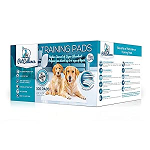 PetCellence Puppy Training Pads Premium 6 Layer Super Absorbent Dog Pad | Eliminate Odours Protect Carpet & Laminated Floor | Anti Slip & Leak Proof | Large Size 60 cm x 60 cm 10