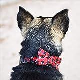 erhuo Haustier Katze Hundehalsband roter Bogen kleine mittlere und große Haustiere, rot, M
