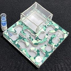 140 * 140mm Grand Espace Camouflage AntHouse Fourmiliere Éducatif avec Alimentation en Eau et en Eau pour Fourmis en Direct (Camouflage Spring)