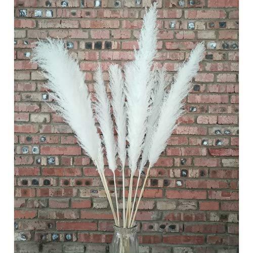 MARAZ Pampasgras Groß natürlich getrocknet als Deko für Wohnzimmer Hochzeit Außenbereich Pampas Gras Pflanzen getrocknete Blumen Trockenblumen Vasen Boho Party eukalyptus (Weiß)