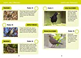 i-SPY Garden Birds: What can you spot? (Collins Michelin i-SPY Guides)