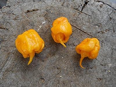 CAROLINA REAPER (Yellow) 10 Samen -Ultra scharfe Chili-Sorte- von Samenchilishop bei Du und dein Garten