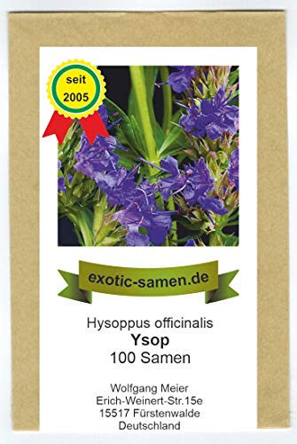 Ysop - Hysoppus officinale (100 Samen)