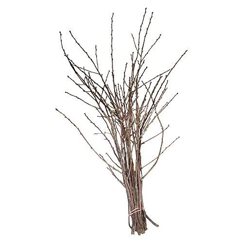20 Sauerkirsche Zweig 100cm | Deko-Zweige für Bodenvasen | als Dekoration Innen u. Außen | Kirsch-Zweig-Deko | Deko