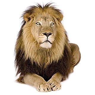Autocollant sticker voiture moto deco animal animaux lion jungle enfant