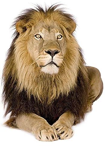 Autocollant sticker voiture moto deco animal animaux lion jungle