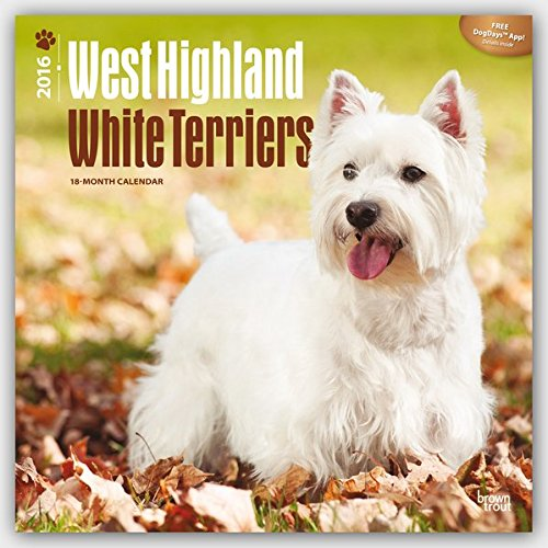 West Highland White Terriers 2016 Wall por BrownTrout Publishers