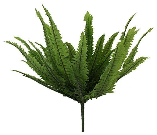 Closer To Nature 30cm Boston Farn Plug Betten Pflanze
