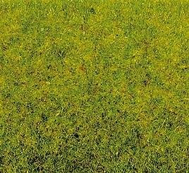 noch-08300-herbe-vert-moyen-2-5-mm