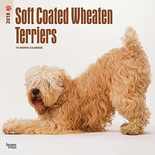 soft-coated-wheaten-terriers-2018-calendar