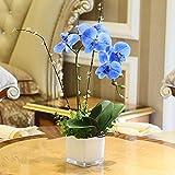 ANSODT Künstliche Fake Blumen Orchidee Simulation Blumensträuße Satz Topfpflanzen dekoratives Glas Vasen, Blau