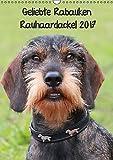 Geliebte Rabauken - Rauhaardackel (Wandkalender 2017 DIN A3 hoch): Terminplaner mit 12 tollen Bildern des Rauhaardackels (Planer, 14 Seiten ) (CALVENDO Tiere)