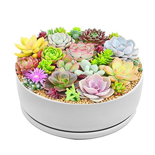 Pot en céramique pour plantes grasses, de Y&M™ - 15,2 cm - Blanc Round LY050-2