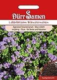 Dürr-Samen Leberbalsam Blausternchen