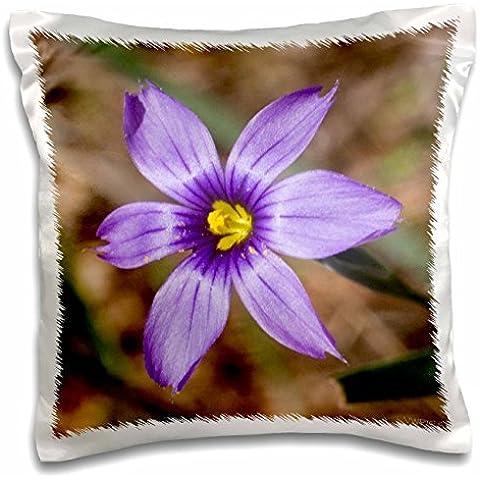 VWPics Blue-Eyed Grass - closeup.(Sisyrinchium bellum).Caspers Park,