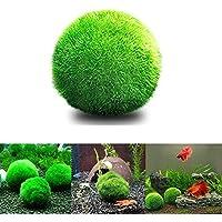 angju [3 PCS ] Bolas de musgo para acuario, plantas vivas, bola de musgo ecológica, bajo mantenimiento, adorno para pecera, camarones, caracoles