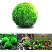 angju [3 PCS ] Bolas de musgo para acuario, plantas vivas, bola de