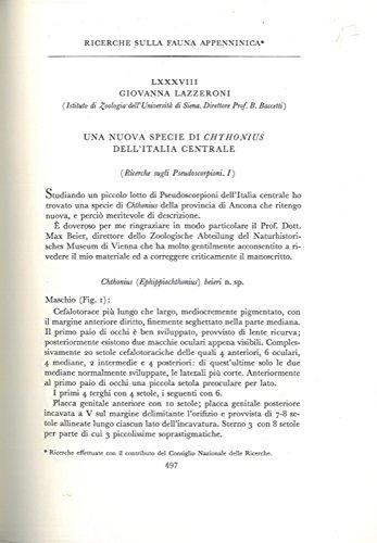 Ricerche sulla fauna appenninica. Una nuova specie di Chthonius dell'Italia Centrale.