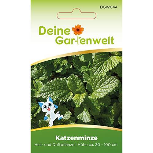 Echte Katzenminze | Nepeta cataria | Minzesamen | Samen für Minze-Pflanzen | Katzenminzesamen | Saatgut für Katzen