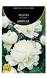 Bulbos - Peonia Blanca - Batlle