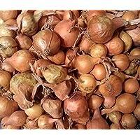 PLAT FIRM Germinación de Las Semillas de Cebolla: Amarillo de Otoã±o Invierno Conjuntos Bulb - 45-50 CT. Listo para Plantar!