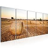 Bild 200 x 80 cm - Feld Bilder- Vlies Leinwand - Deko für Wohnzimmer -Wandbild - XXL 5 Teilig Teile - leichtes Aufhängen- 805655a