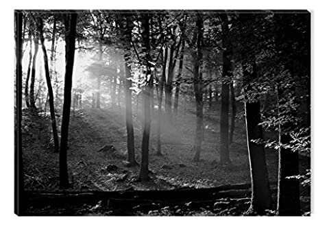 Startonight Glass Wall Art Acrylic Decor Black and White Morning in the Forest, 60 x 90 cm the Ultimate Wall Art
