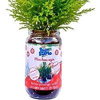 Blue Farmers | Sapin de Noël | FABRIQUE EN FRANCE | Sapin à faire pousser soi-même | Cadeau original | Cadeau parfait pour les enfants | Pousse garantie