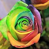 Xiton 200 PC Coloridos Arco Iris Rosa Flor Semillas pétalo Plantas jardín Patio decoración del hogar