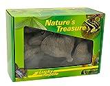 Lucky Reptile DB-01 Nature's Treasure Decor Box