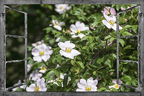 Artland Wandbild auf Alu Verbundplatte Christine Nöhmeier Fensterblick Wildrosen Landschaften Fensterblick Collage Weiß