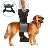 RockPet Hunde Hilfsmittel, von Tierärzten genehmigte Hebebühne für Rehabilitation (L,Grau)