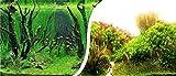 Aquarium Rückwandfolie 200x50cm