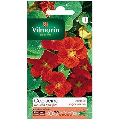 Vilmorin - Sachet graines Capucine Lobb Spitfire