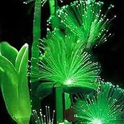 100Pcs Smaragd Fluorescent Blumensamen, wachsen leicht Seltene Smaragdblumensamen Night Light Emitting Pflanzen für Garten-Dekoration