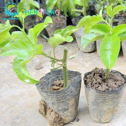 Pinkdose 2016 nuove piante rare imballaggio originale frutto della passione piante organiche passiflora edulis nutriente granadilla garden frutta- 20 p: arancione