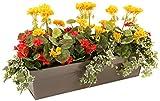closer2nature Künstliche Geranie rot Begonia und Gelb Display in einer graphit grau 70cm Pflanztrog