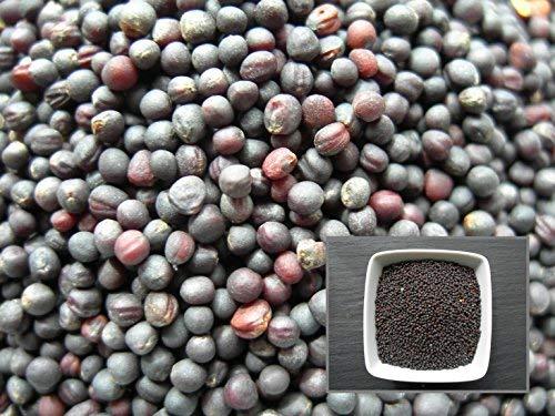 Colza Fourrager - 6 sachets de 1 gramme - Brassica Napus L. - Rapeseed - (Engrais Vert - Green Manure)