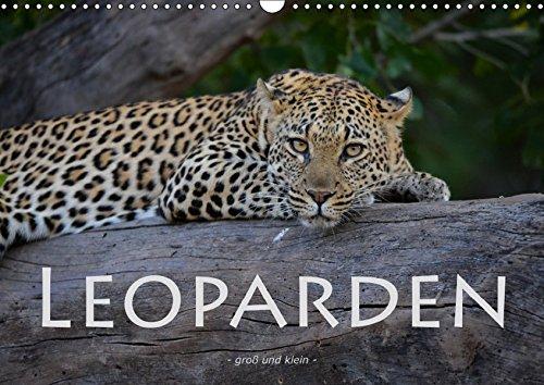 Leoparden - groß und klein (Wandkalender 2019 DIN A3 quer): Faszinierende Aufnahmen dieser wunderschönen Raubkatze (Monatskalender, 14 Seiten ) (CALVENDO Tiere) (Seiten Leopard)