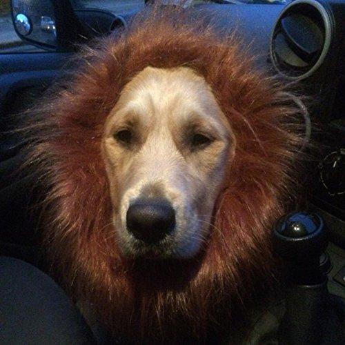 quanjucheer Haustier Kostüm Perücke Lion Mane Kleidung für Hunde mit Kleid,