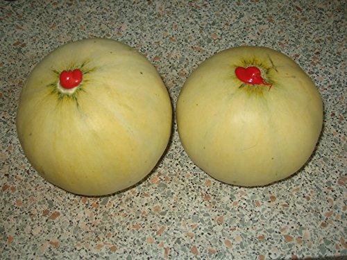 Zuckermelone Tamaris - Melone - 10 Samen