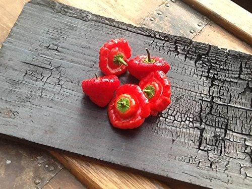 Rocotillo Squash Jamaican Mushroom Red Hot Chili Pepper Samen 25 PCS