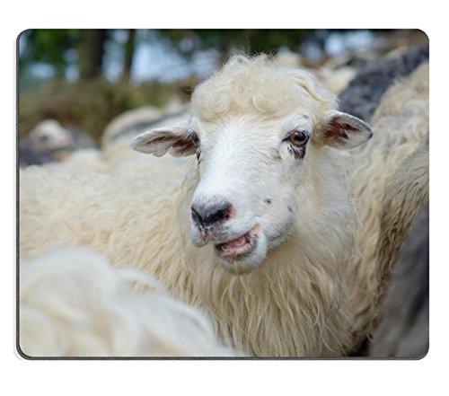 luxlady-gaming-mousepad-image-id-38851325-pecore-mastica-erba-mandria-sul-pascolo
