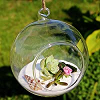 Hosaire 8 Piezas Jarrón de Cristal Colgante Decorativo Decoración Hidropónica Decorativa de la Boda del Florero de la Bola de la Flor Decor Home Baño Regalo Ideal Boda Paquete Size 8 * 8CM